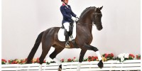 3rd Oldenburger Special Edition Dressage Collection | Oldenburger ...