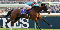 Almond Eye ready for 'sayonara race' in a Japan Cup for the ages | Horse  Racing News | Racing Post