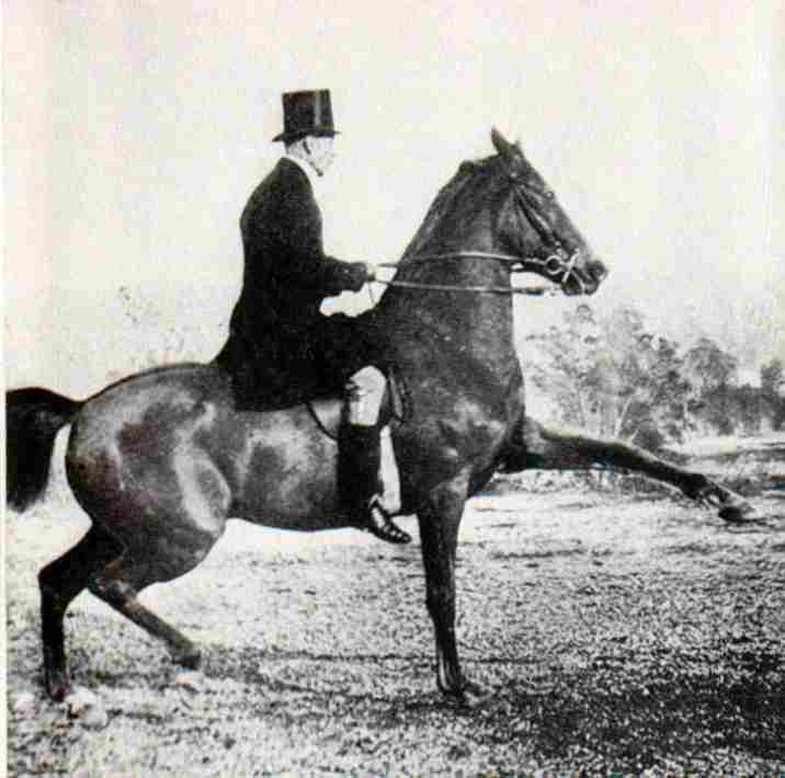 El maestro James Fillis (1834-1913). El galope hacía atrás, ejercicios en tres extremidades, el salto sentado,,,