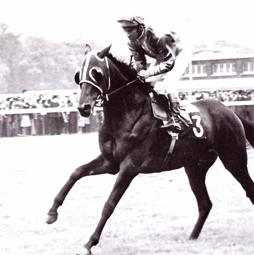 STAR APPEAL ganadcor del Arco 1975