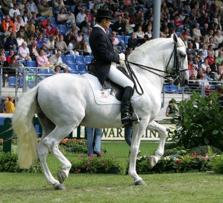 Rafael Soto con INVASOR. Foto de Cyberhorse.net.aut