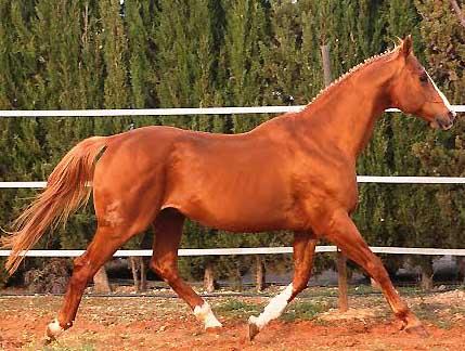 Equus dOlympe