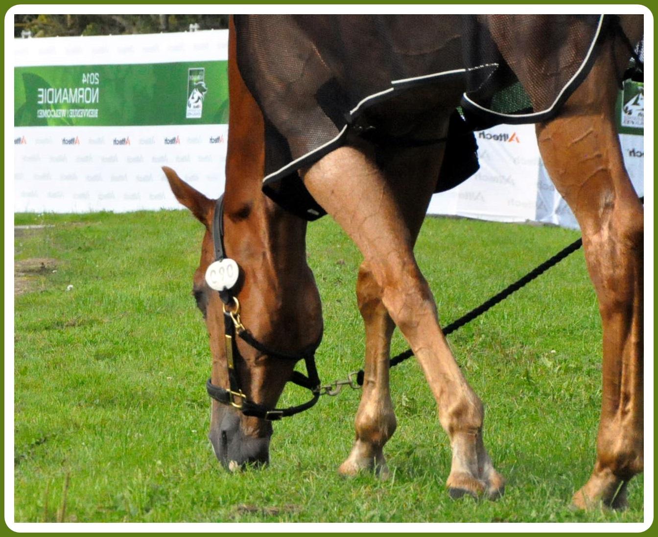 El caballo de la cría española NEREO (CDE) en los JEM de Normandía