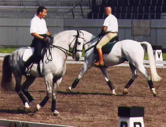 Luis Lucio con ALJARAFE y Enrique Sarasola con DOPE DOUX en la cuarentena de Aachen 2000 para los JJ.OO de Sydney