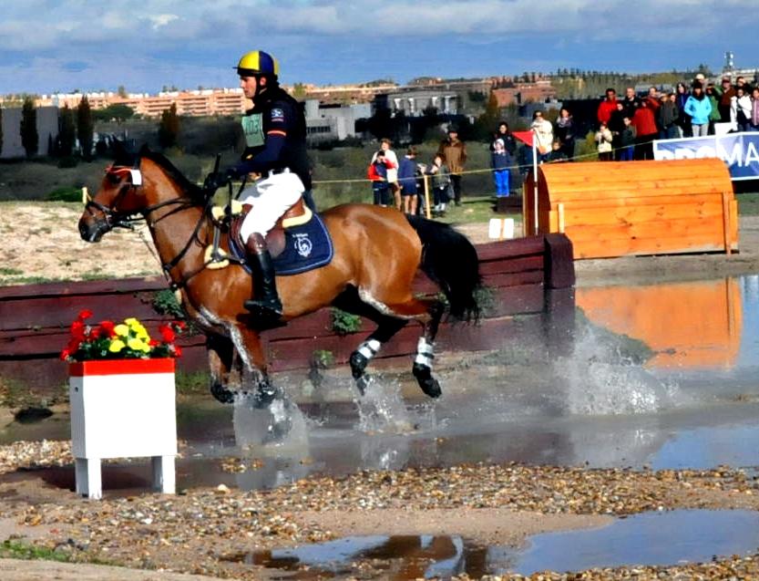 PIZARRA la angloárabe (Trsor du Renom / QUATAR de Plape  Carnaval) que con 6 años ganó la Ccomplementaria del Campeonato de España 2014 (nacional 1 estrella)