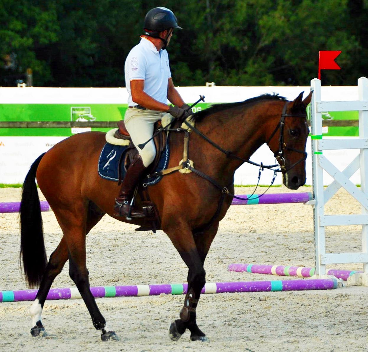 HITO caballo nacional español competidor en los JEM 2014