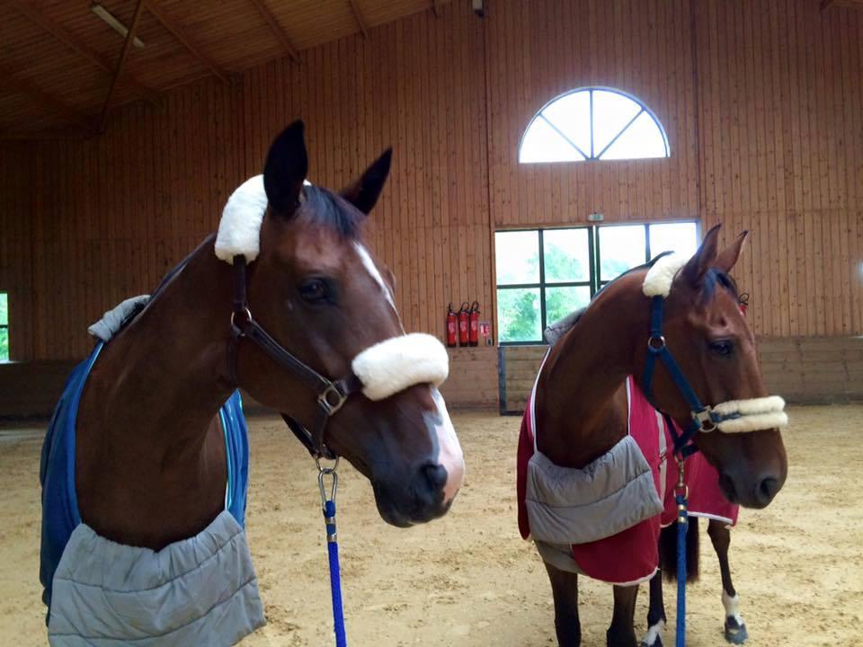 MIRLA e HITO los caballos de Albert Hermoso en la Bosquetterie
