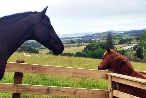 QIMBO descansando en Nueva Zelanda